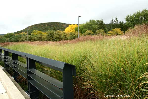 Ornamental Grasses Upstate Ny : Grasses corning museum of g