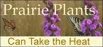Prairie Plants Can Take The Heat