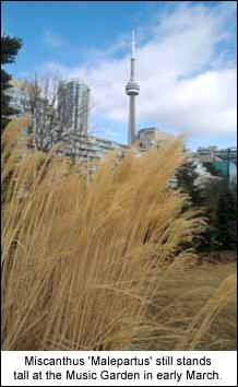 Ornamental grasses for winter chosen well ornamental grasses can be delightful plants in all four seasons in early spring the fresh green blades shoot vigorously upwards before workwithnaturefo