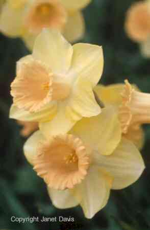 Beautifulbotany Com Botanical N Q Stock Photography By
